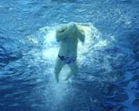 Брасс плавание (видео обучение)
