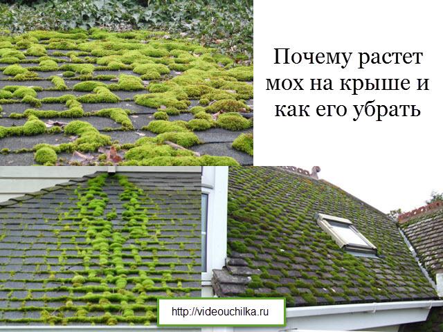 Почему растет мох на крыше и как его убрать