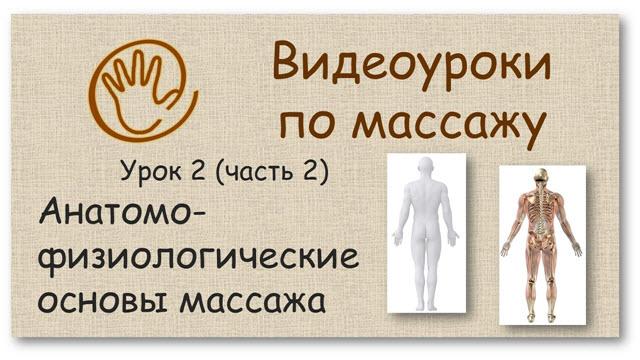 Азбука массажа. Анатомо-физиологические основы массажа