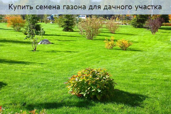 Купить семена газона для дачного участка